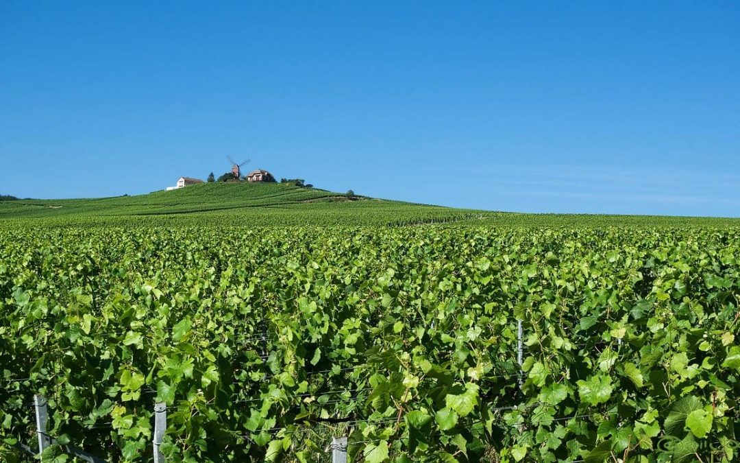 Champagne region: facts & figures!