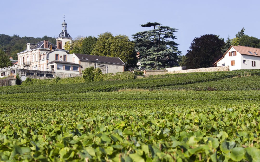 Taste and discover champagne with Champagne Travel